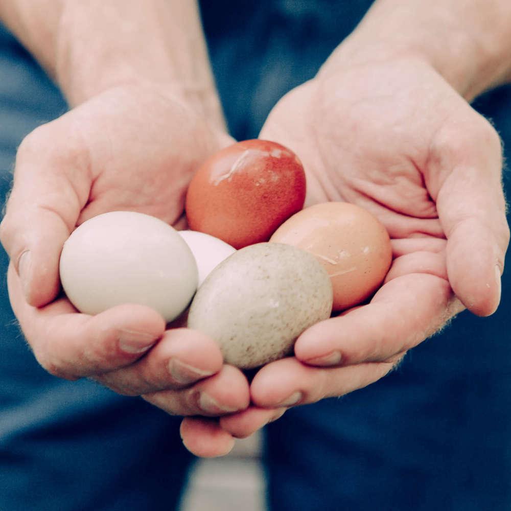 hands-holding-eggs-PDV65EZ
